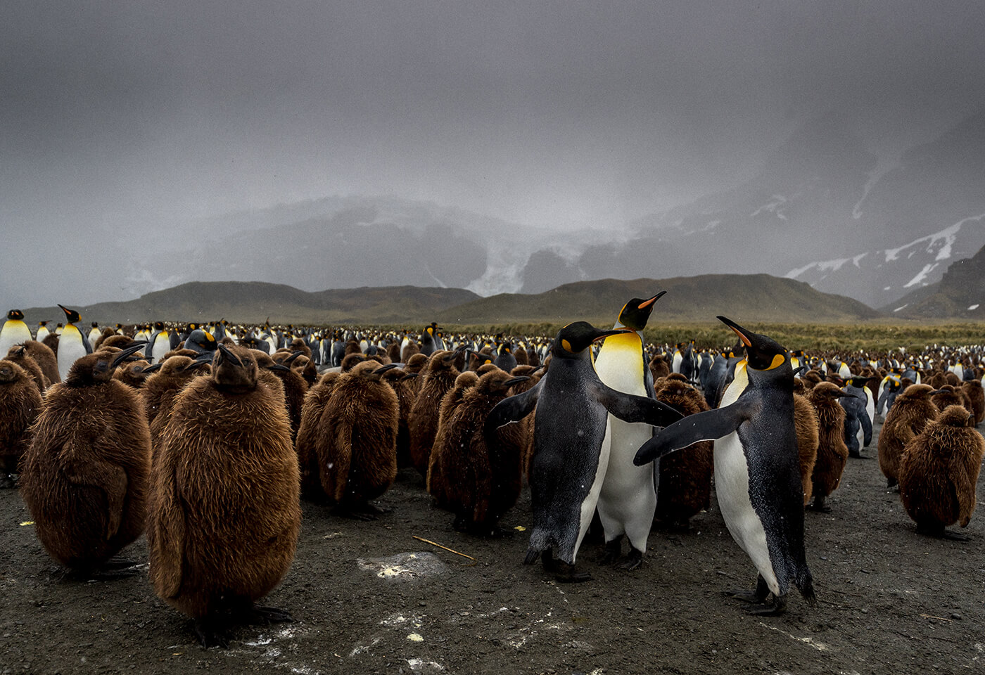 Landscape image of penguins