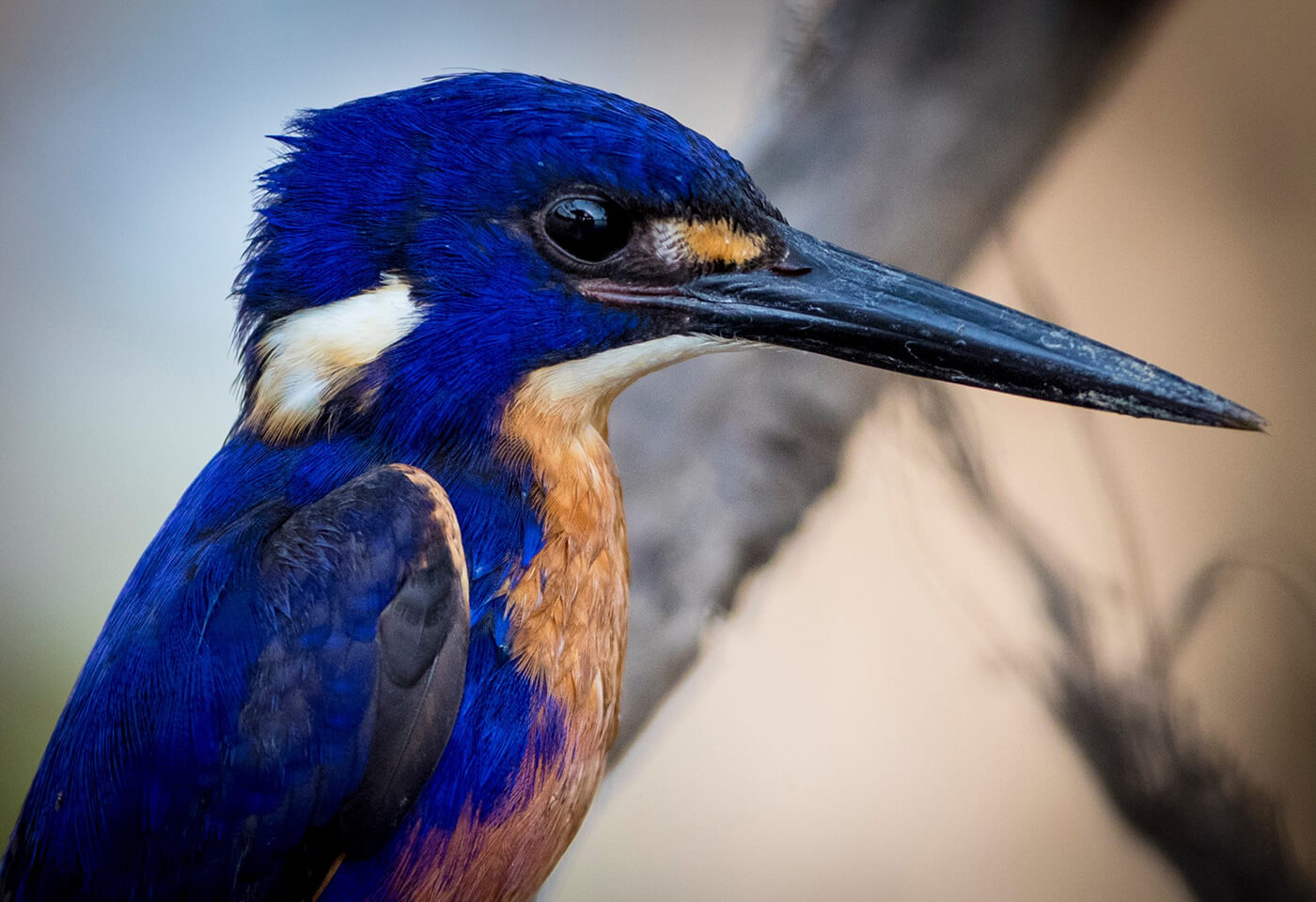 Wildlife Bird Photography by Jay Collier