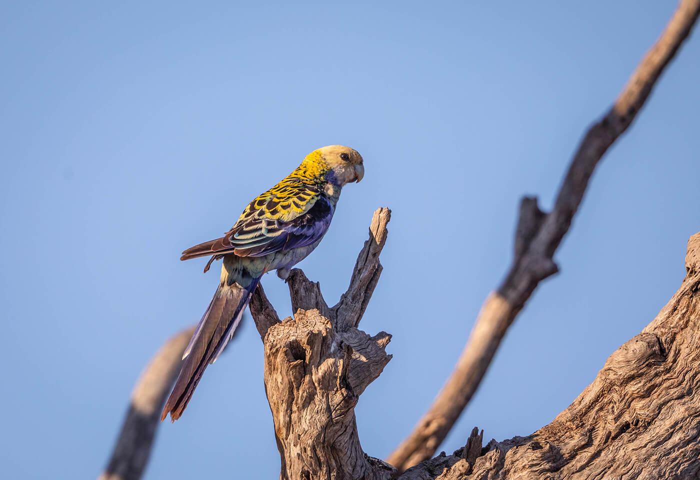 Bird Photography Walk by Boobook Tours