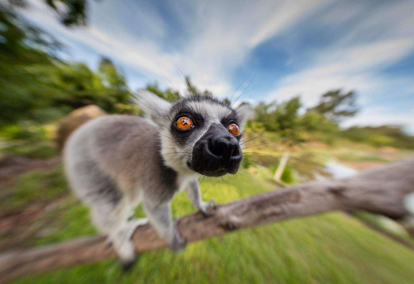 Australian Zoo Greg Sullavan Colin Baker