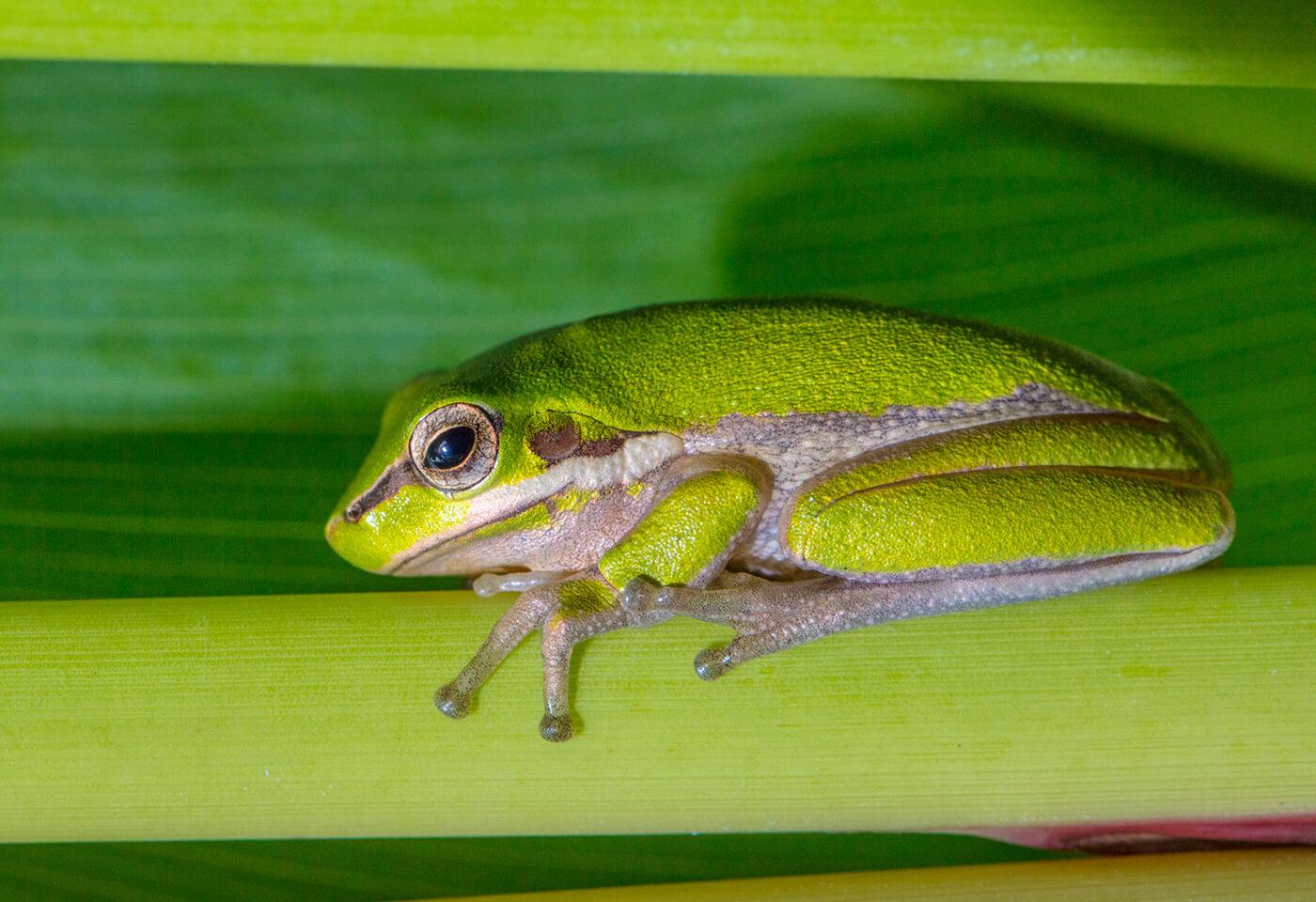 Macro photograph of frog