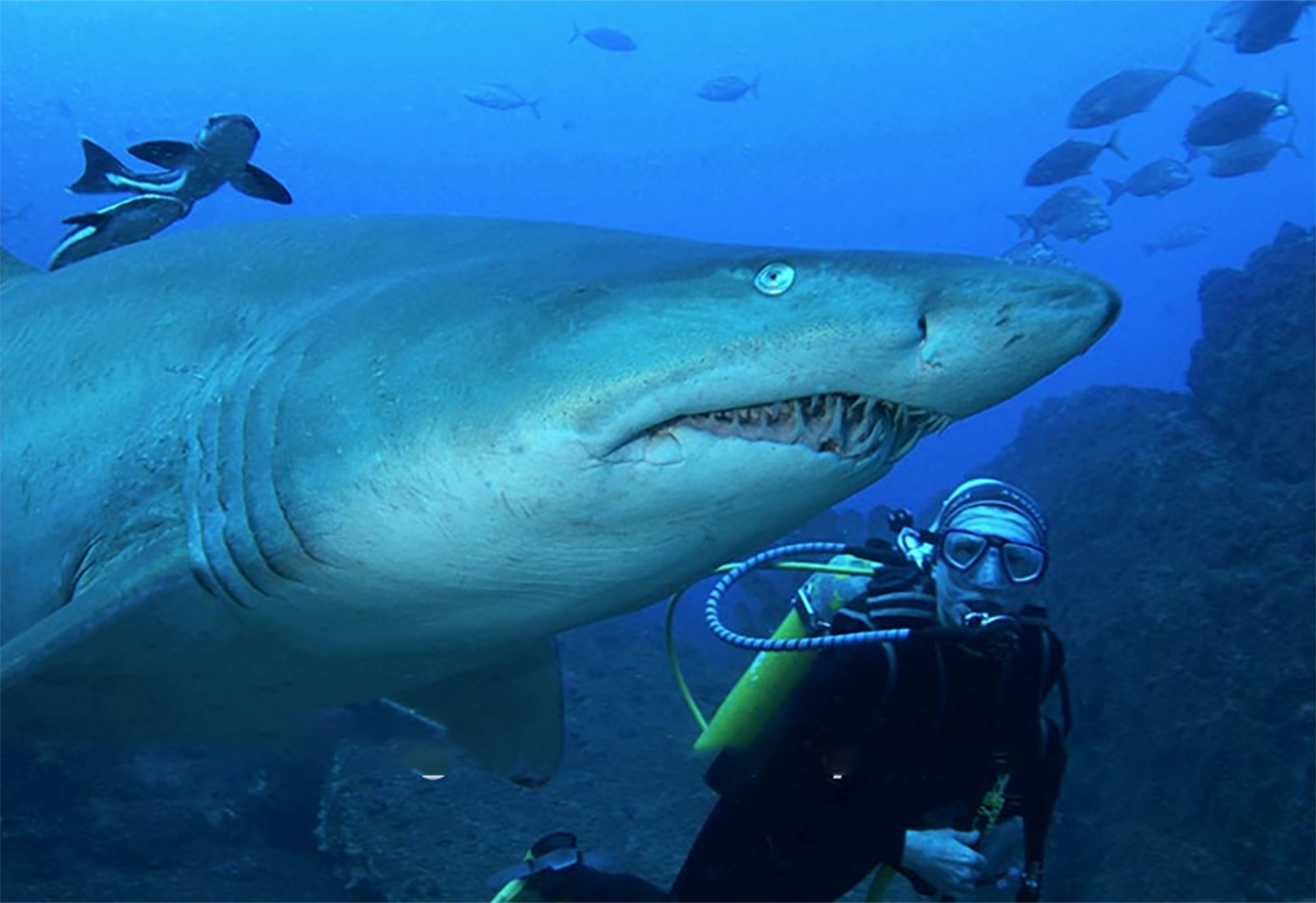 Underwater image of a shark and diver