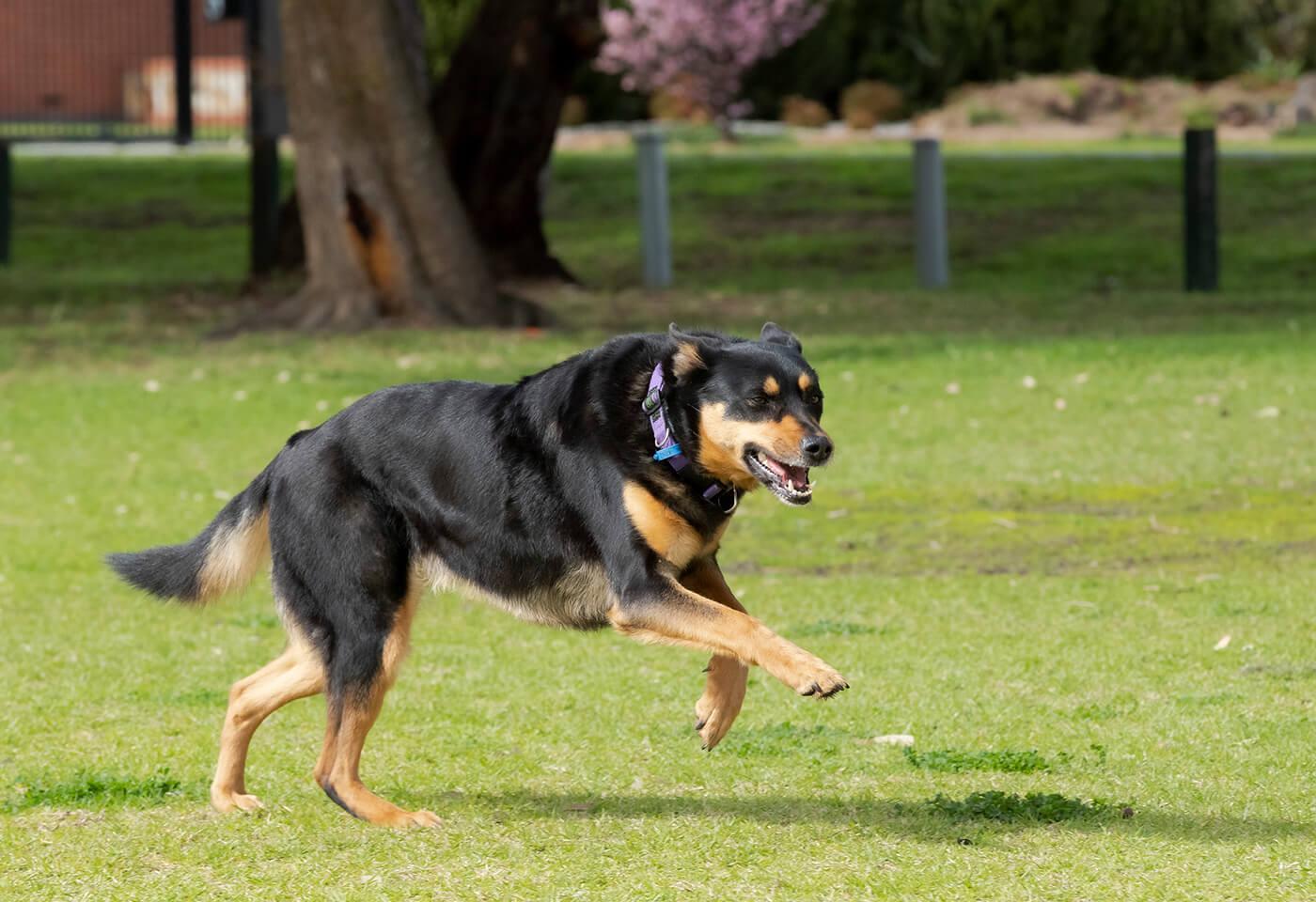 Image of a dog by Steve Huddy