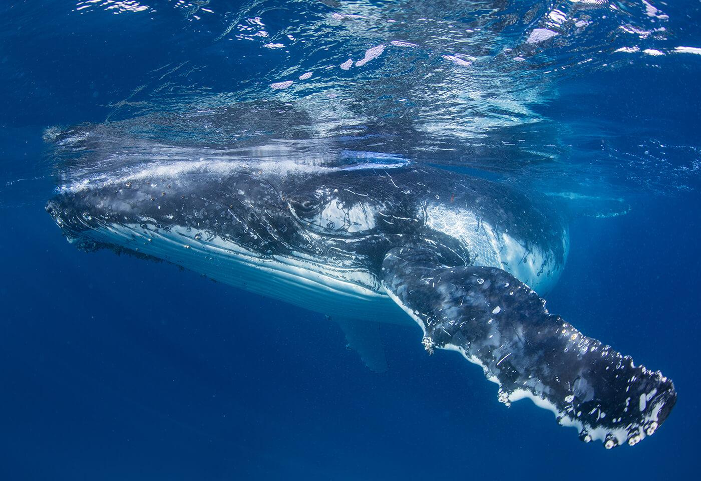 Landscape image of whales