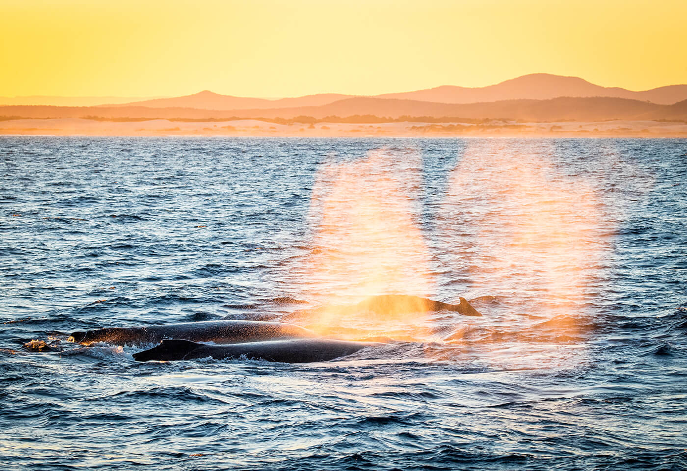 Image of whales