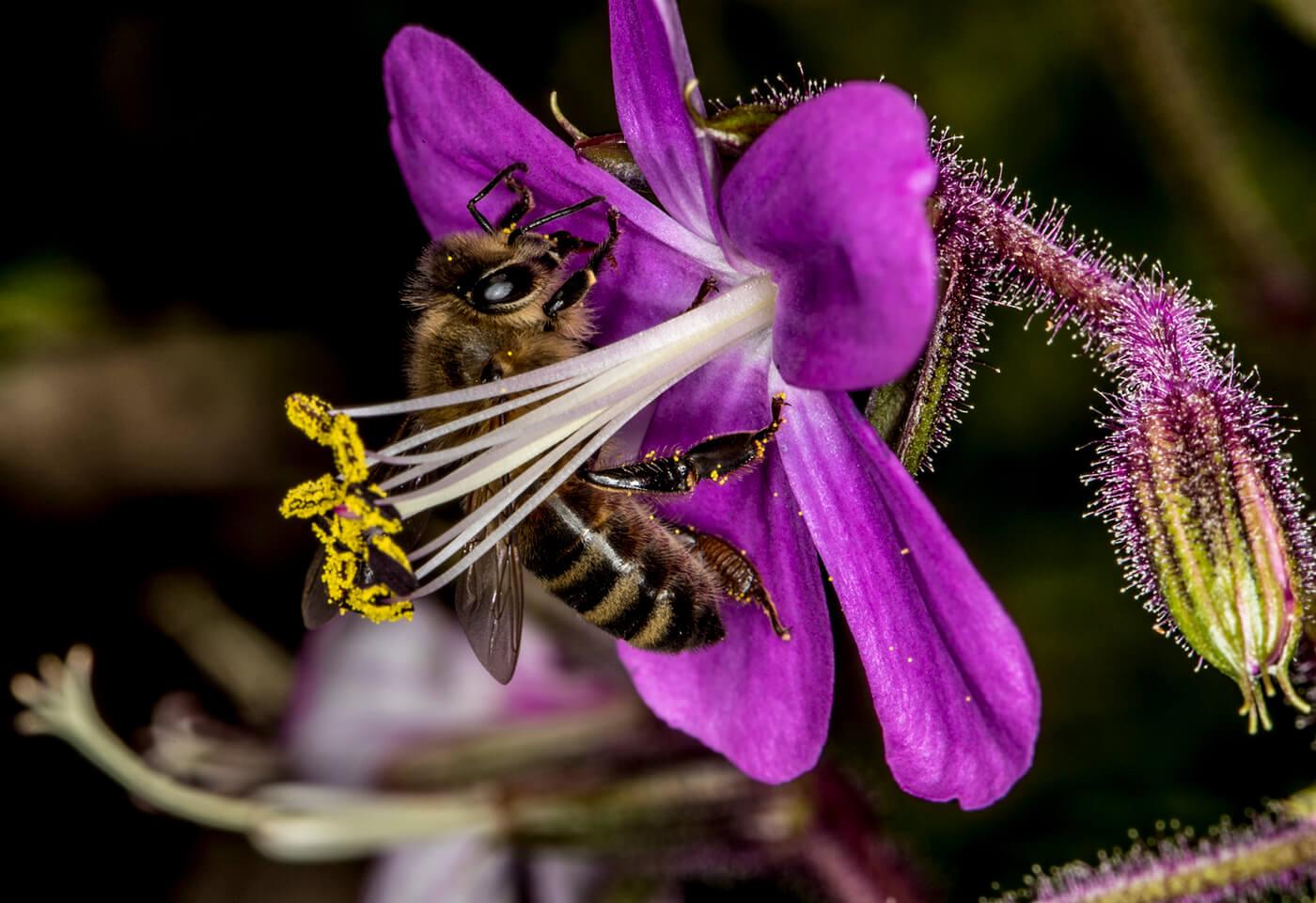 Macro image of bee and purple flower
