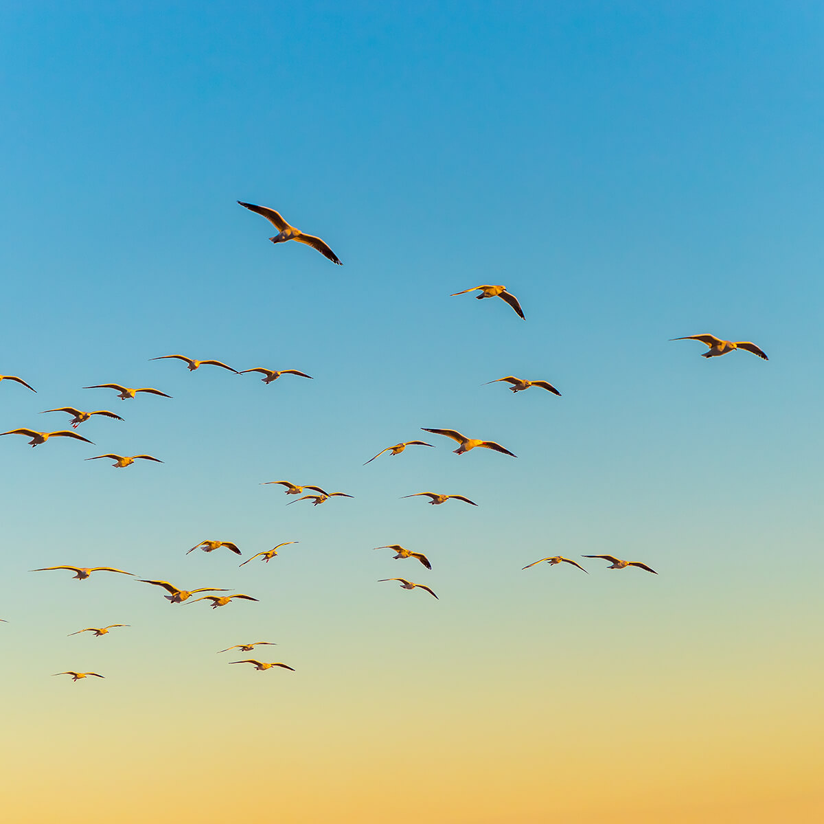 Landscape image of birds in flight