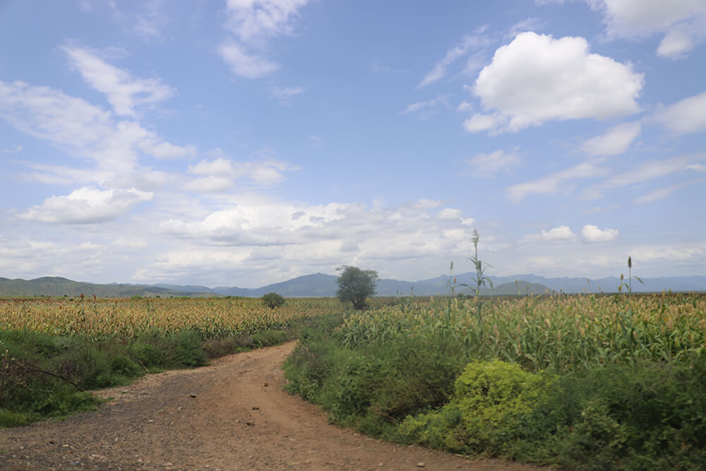 Landscape image of corn field