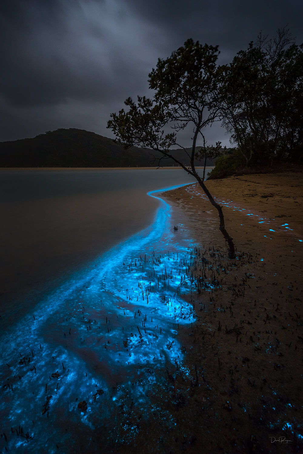 Bioluminescence photo shot on a EOS 6D Mark II and EF 16-35mm f/4L IS USM Lens by Davey Rogers