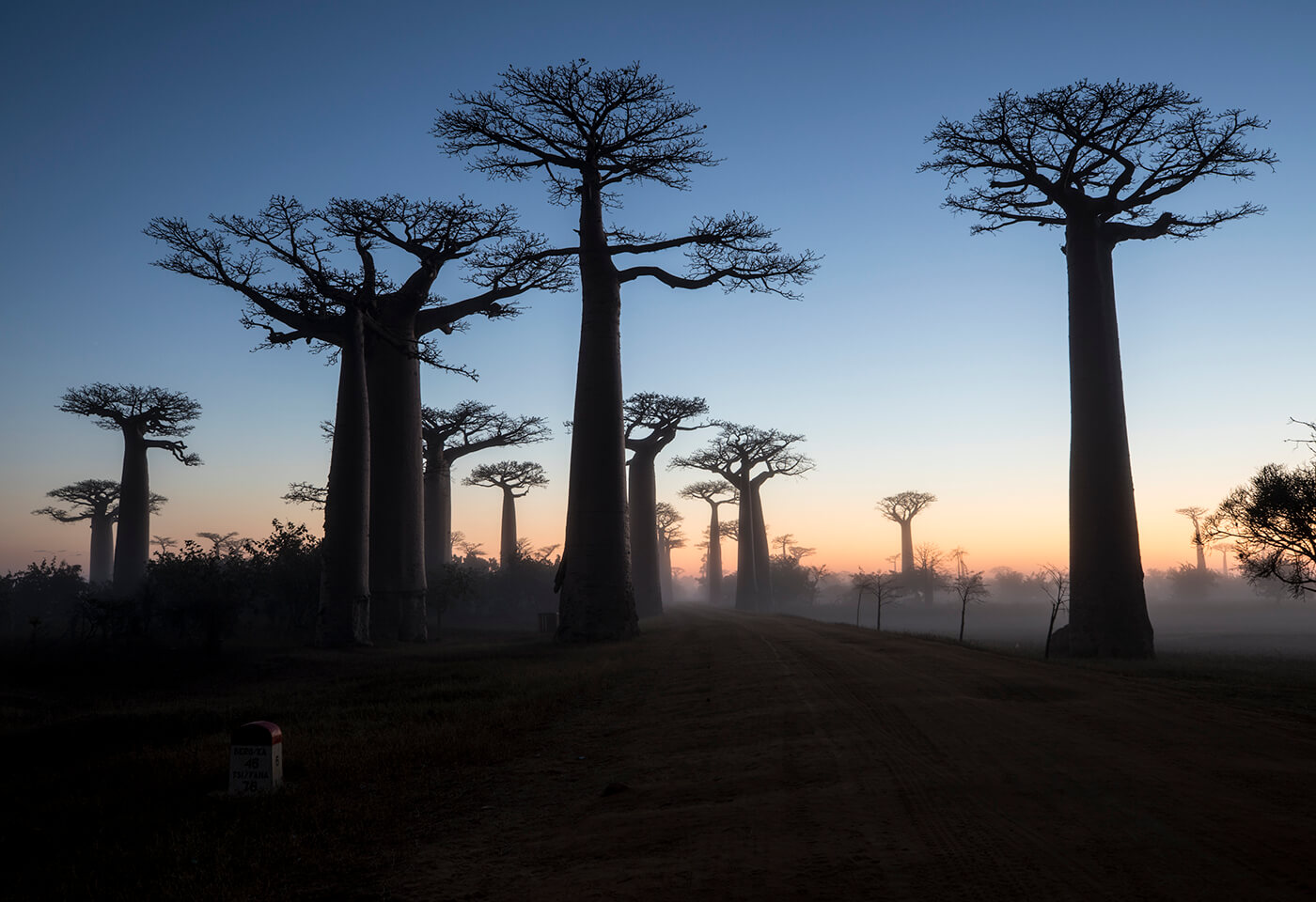 Madagascar Through the Lens of Wildlife Photographer