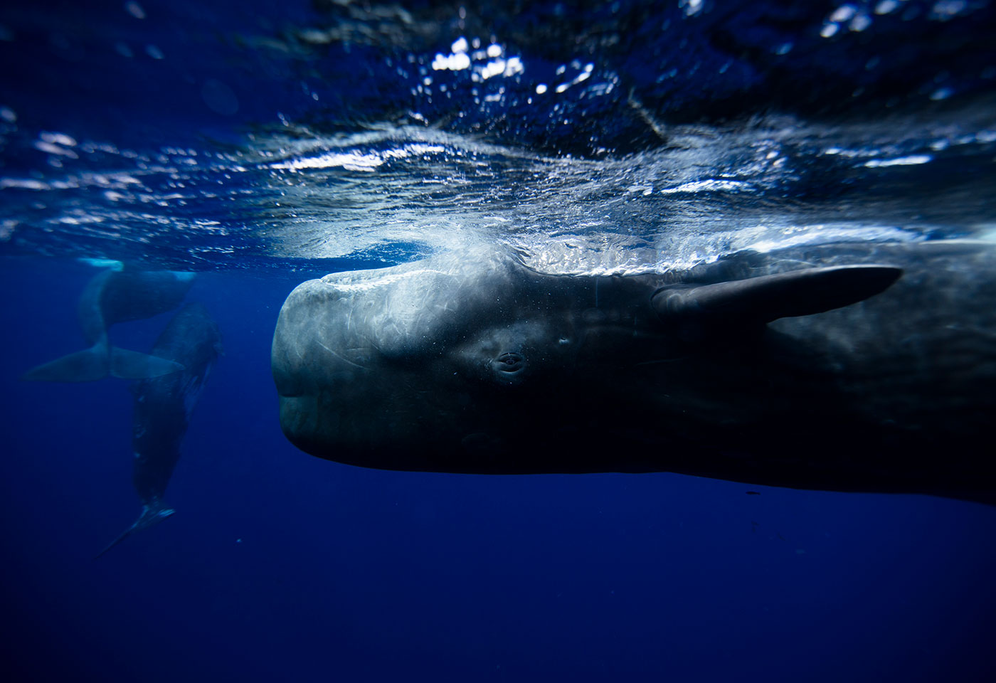 Underwater Photography by Krystle Wright