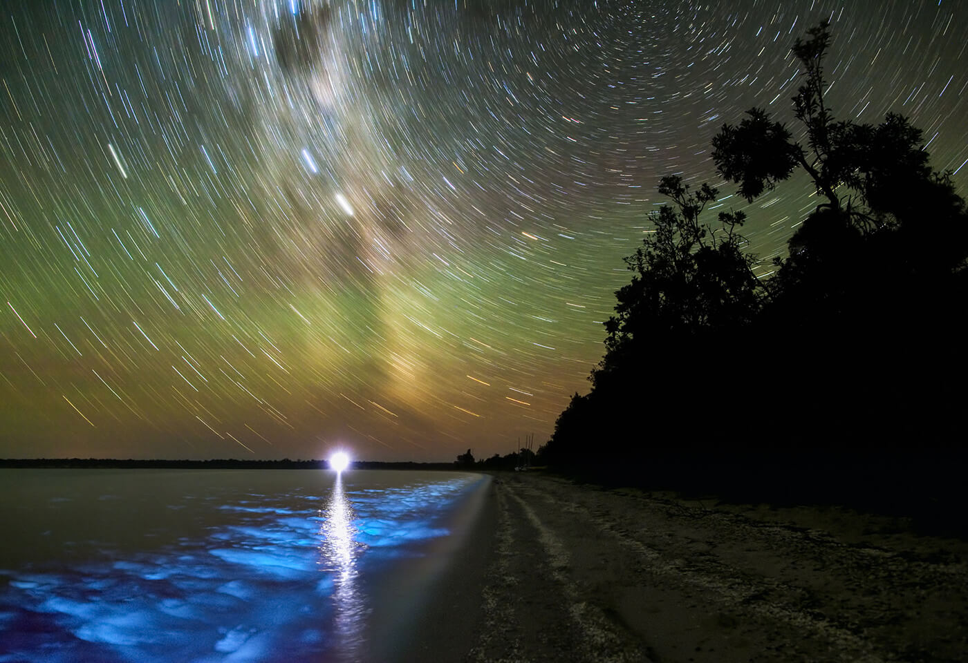 Bioluminescence at Gippsland Lakes