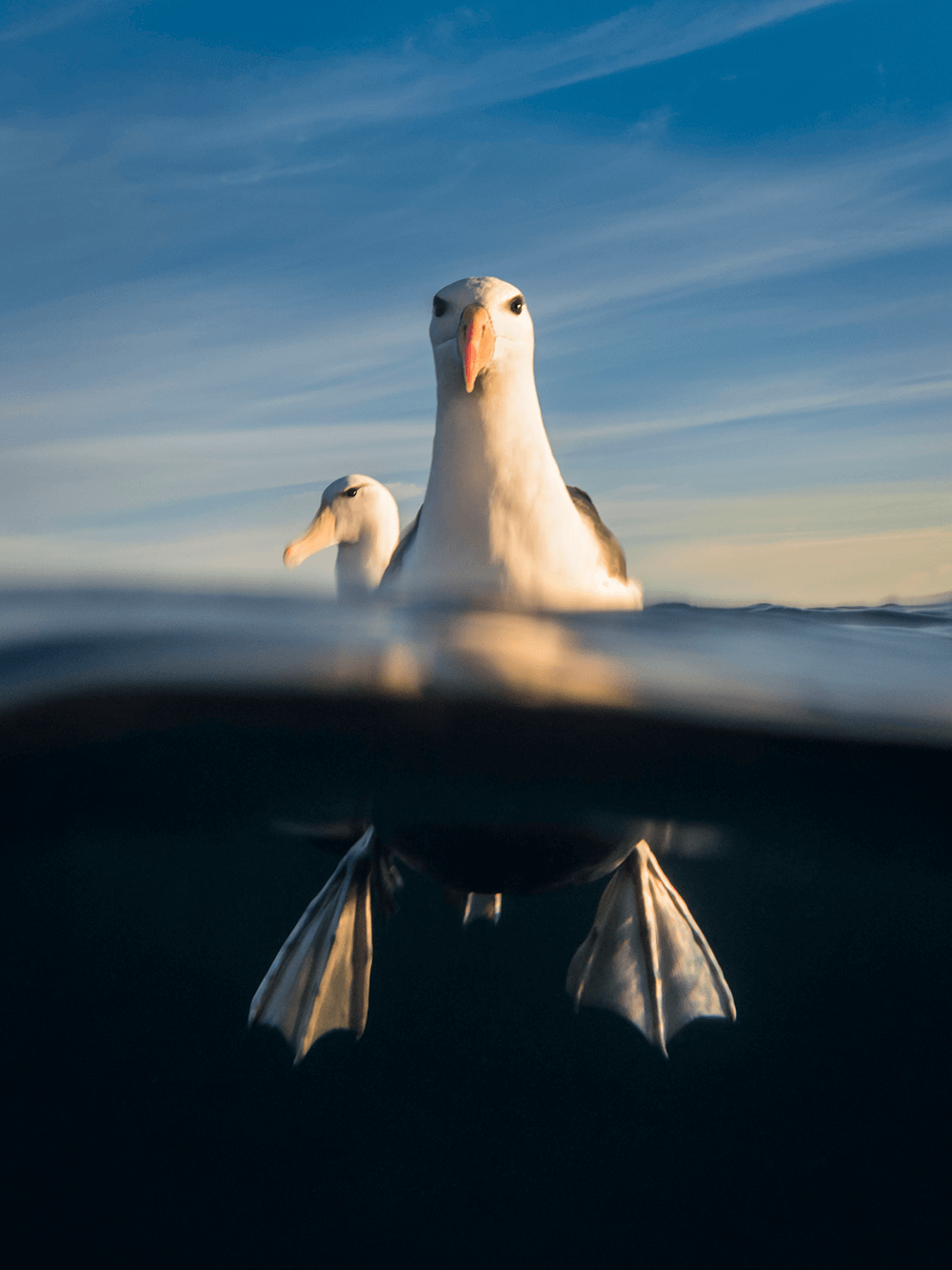 Image of a seagull by @submerged_images
