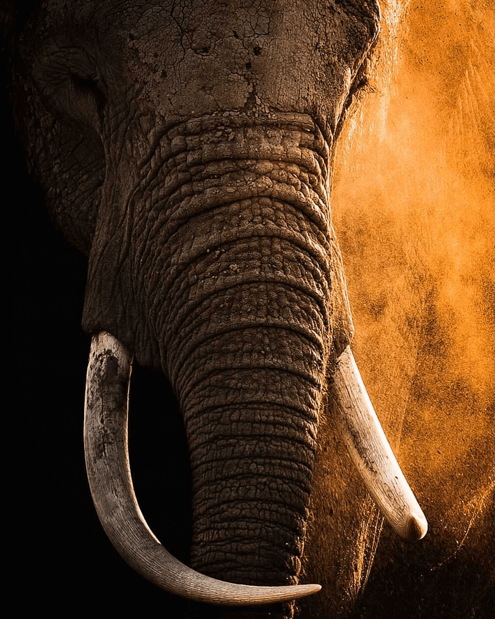 Wildlife photography by @hshphotos
