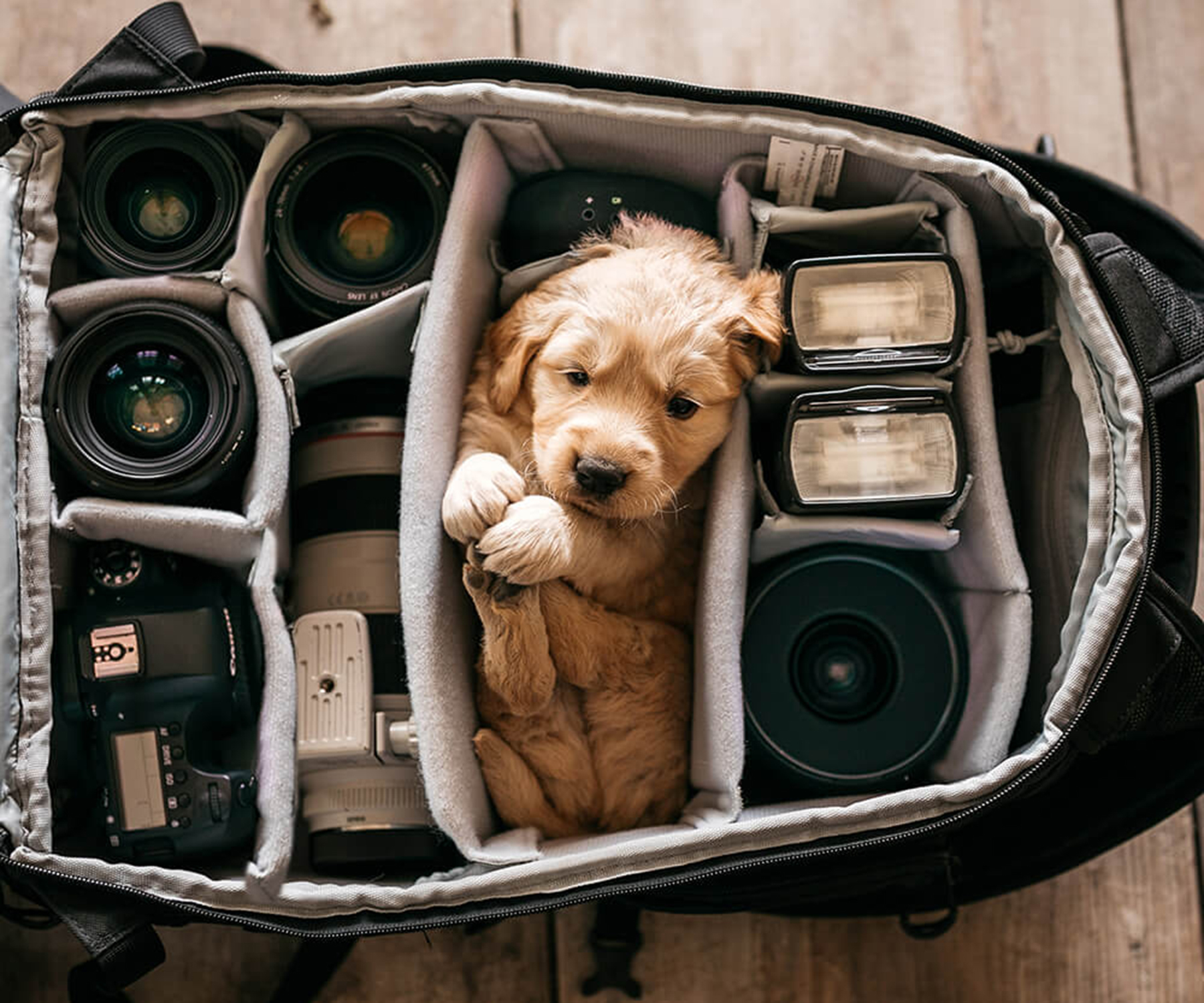 Image of puppy in camera bag by Chris K