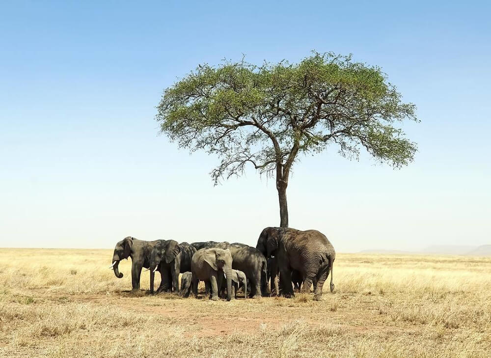 Landscape image of Elephants around tree