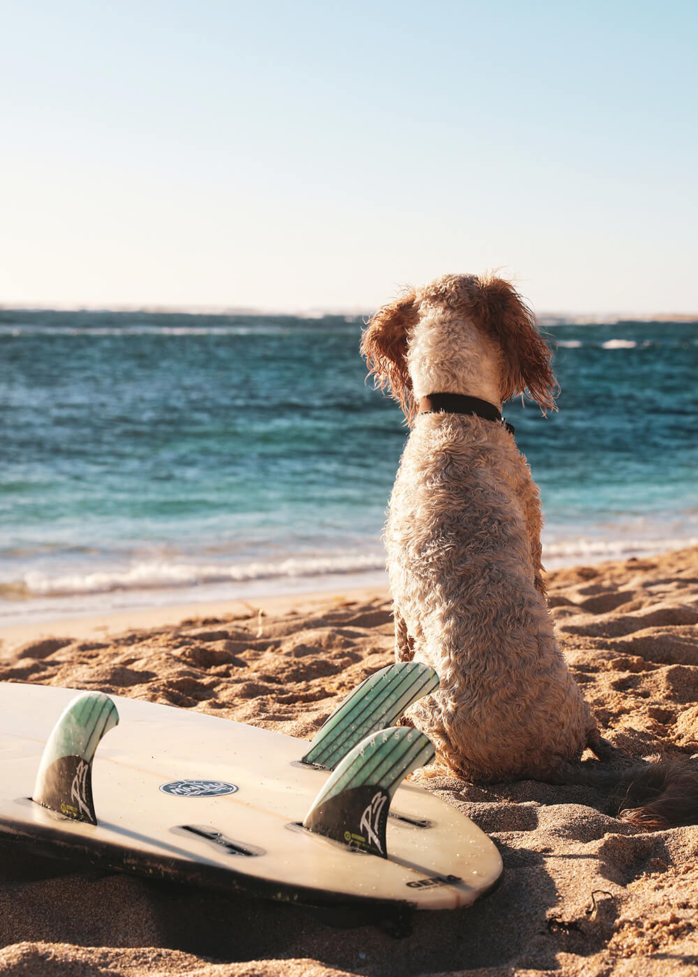 Image of a dog at the beach by Salty Travellers