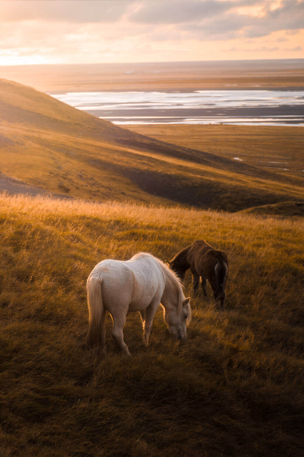 photo of wild horses in Iceland. Image by Steph Vella