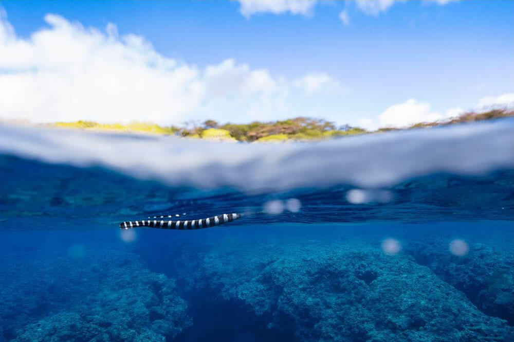 Underwater image of snake