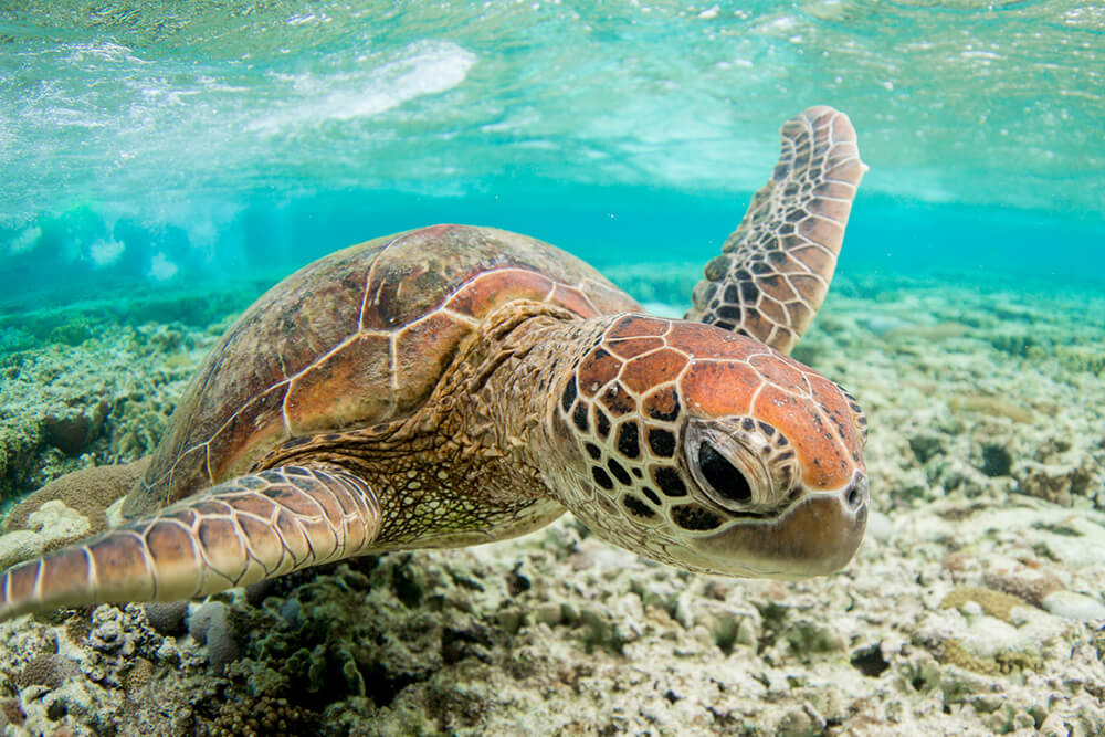 Close up shot of turtle underwater