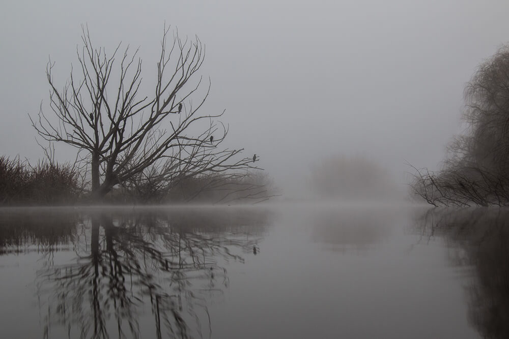 leafless tree in fog and water reflection