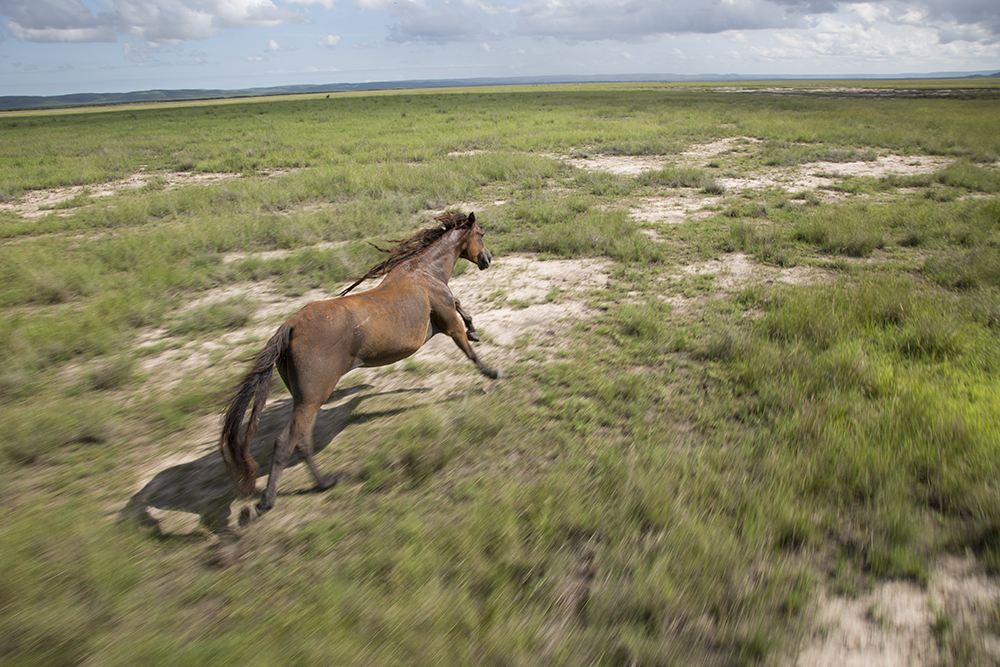 Aerial photo of a wild horse by Matt Wright