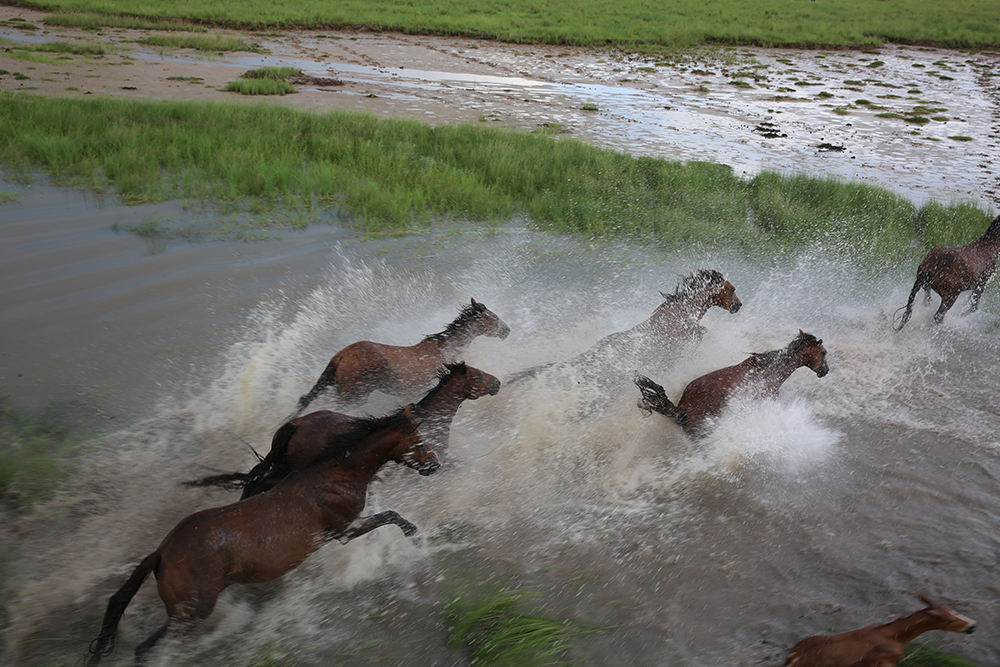 Aerial shot of wild brumbies by Matt Wright