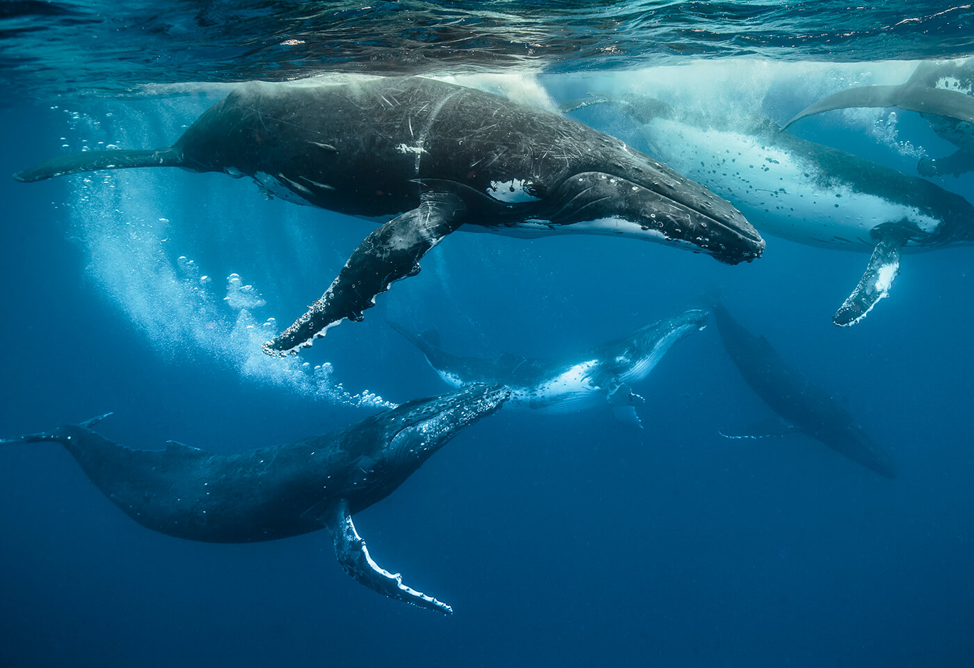 Photo of whales in ocean by Darren Jew