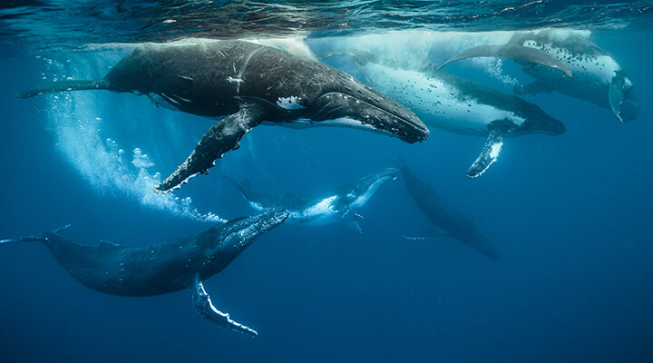Photo of whales swimming in ocean by Darren Jew