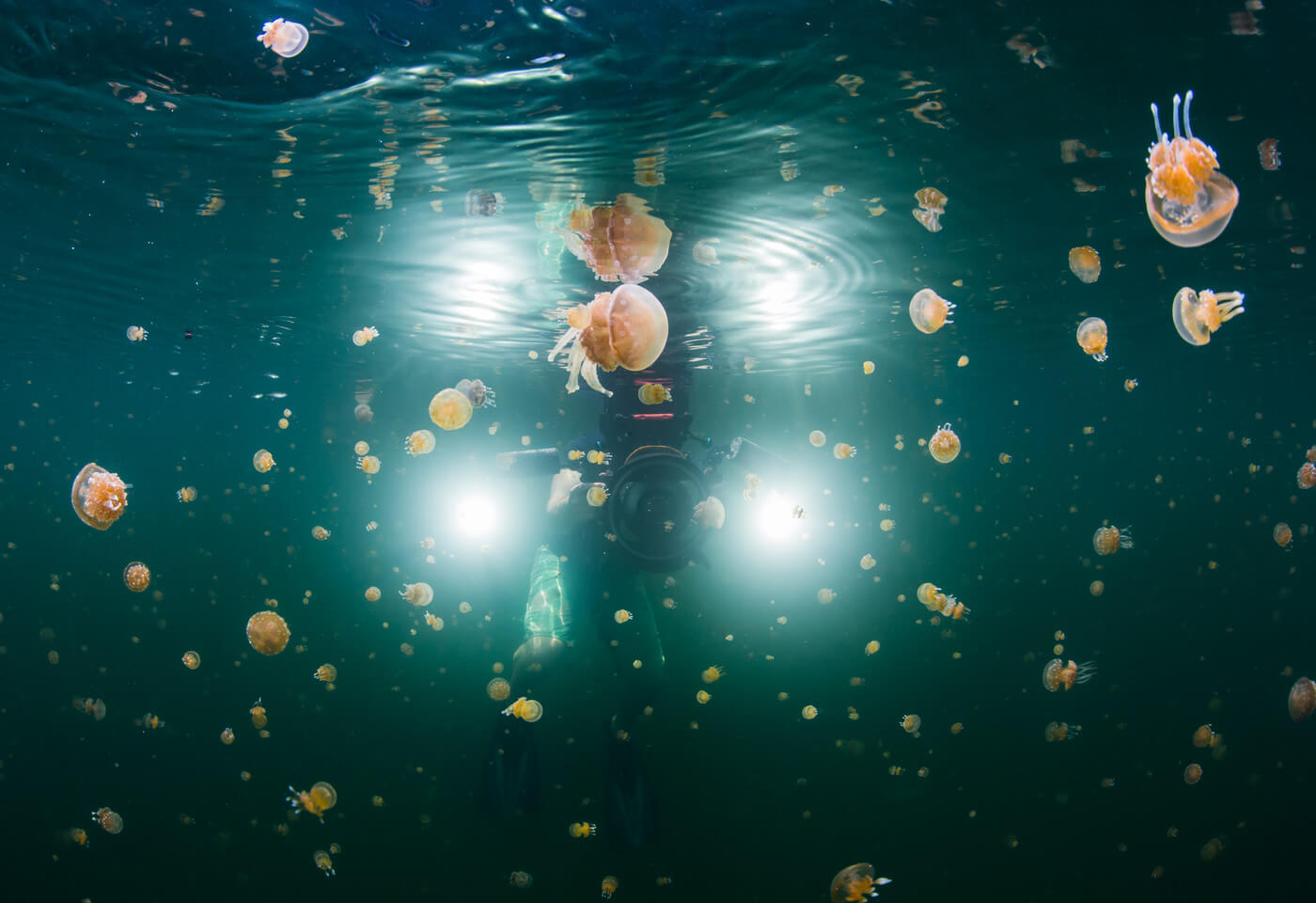 photo of jellyfish taken in the Raja Ampat region